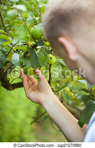 Man working in orchard - csp21270880
