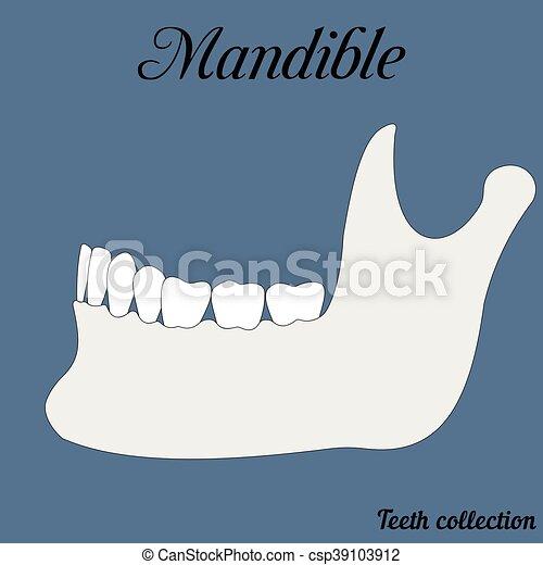 Muela, superior, más bajo, mordedura, mandíbula, cierre, dental ...