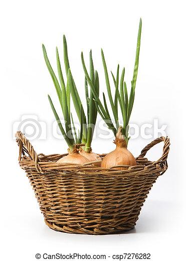 mand, de uien van de lente, kunst, groeiende - csp7276282