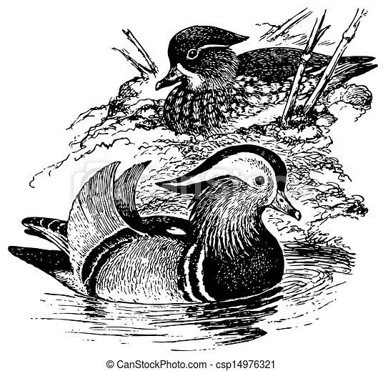 Mandarin oiseau canard mandarin oiseaux canard - Illustration canard ...