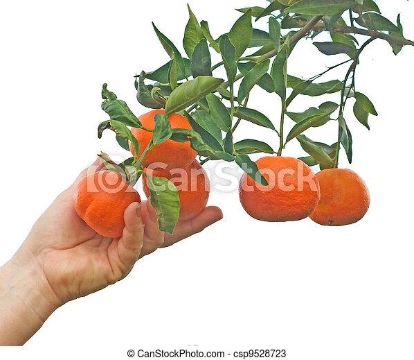 Sucursal mandarina - csp9528723