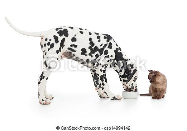 manger, séance, bol, chien, chaton, fin, blanc, dalmatien - csp14994142
