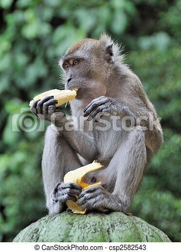 manger singe banane manger singe contre brouill photos de stock rechercher des. Black Bedroom Furniture Sets. Home Design Ideas