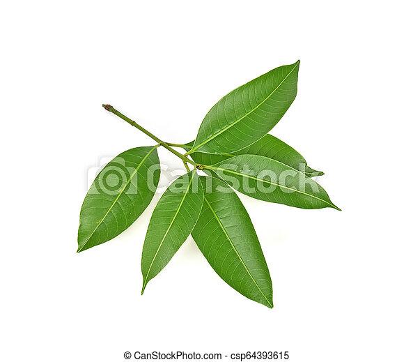 Mango leaf on white background - csp64393615
