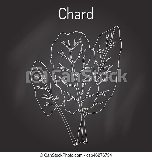 Swiss Chard Illustrations And Clip Art 225 Swiss Chard Royalty Free Illustrations And Drawings Available To Search From Thousands Of Stock Vector Eps Clipart Graphic Designers