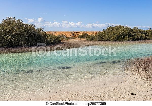 Mangrove bay in the national park Ras Mohammed, Sinai, Egypt - csp25077369