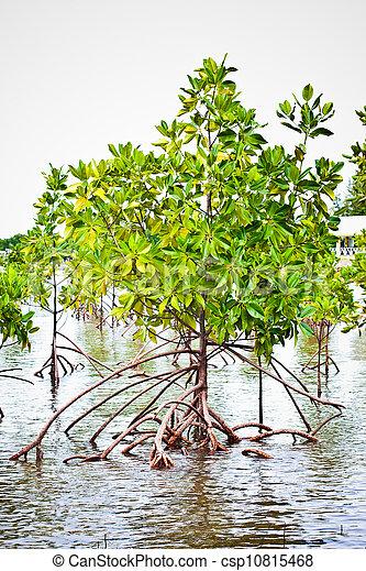 Mangrove forest - csp10815468