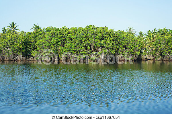 Mangrove Forest - csp11667054