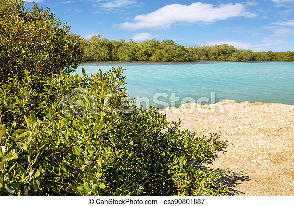 Mangroves in National park Ras Mohammed in Egypt - csp90801887