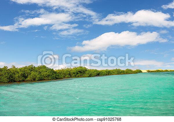 Mangroves in National park Ras Mohammed in Egypt - csp91025768