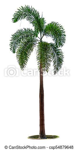 manila palm christmas palm tree stock photo_csp54879648jpg - Christmas Palm Tree Pictures