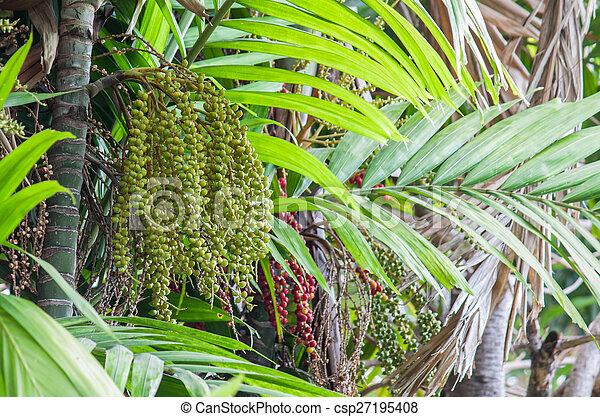 manila palm or christmas palm tree csp27195408 - Christmas Palm Tree Pictures