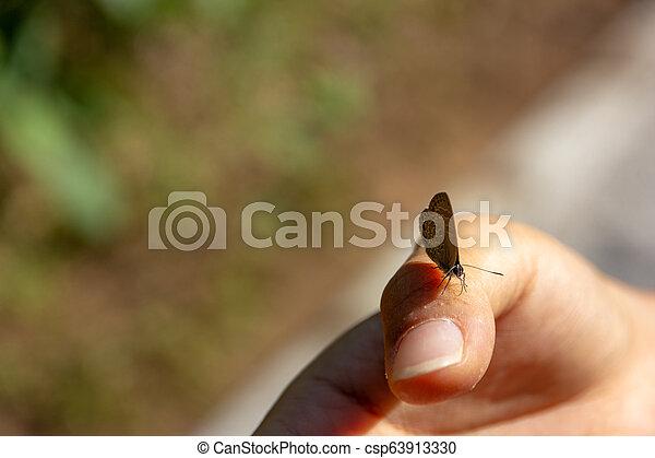 Mariposa de alas de Gossamer en mano de una mujer asiática en el bosque - csp63913330