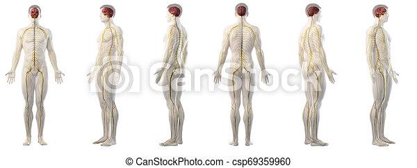 mans nervous system - csp69359960