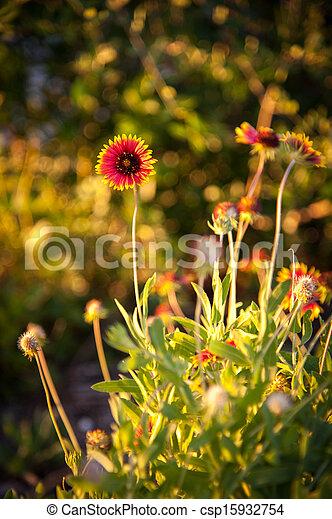 Flores de manta - csp15932754