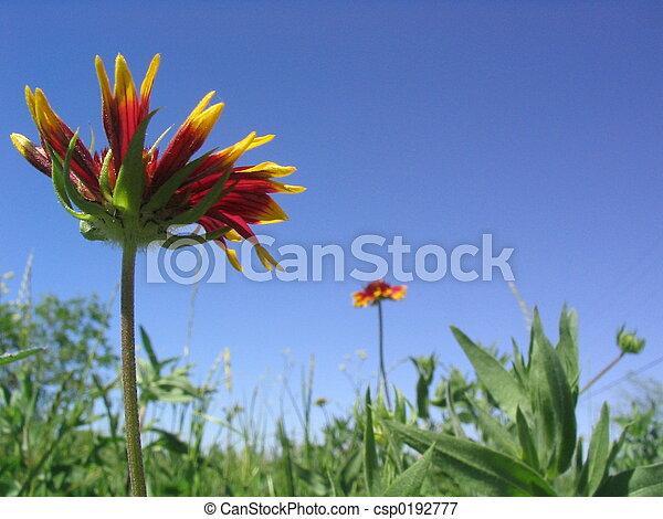 Flores de manta - csp0192777