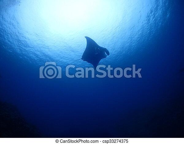 Manta ray - csp33274375