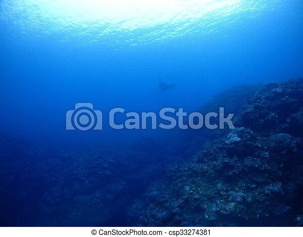 Manta ray - csp33274381