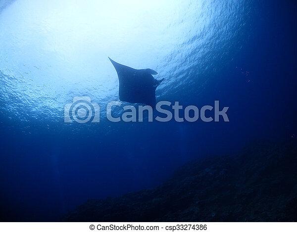 Manta ray - csp33274386