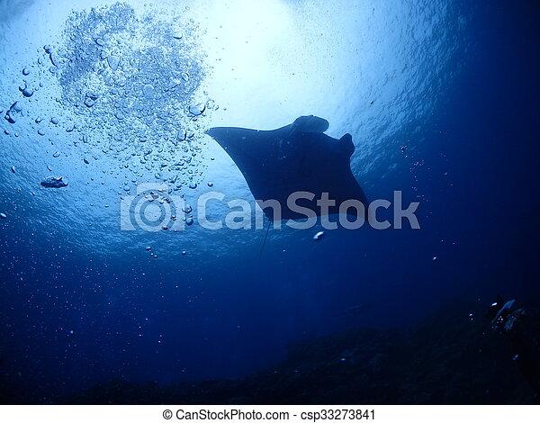 Manta ray - csp33273841