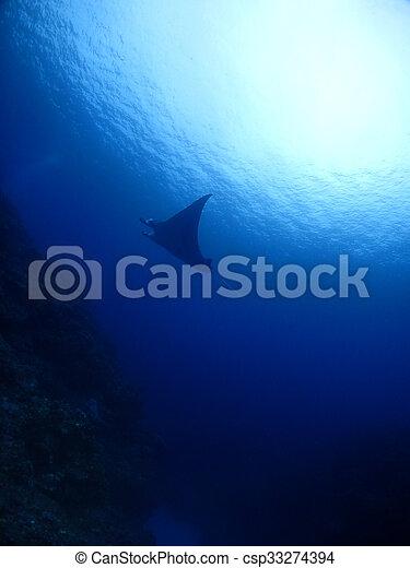 Manta ray - csp33274394