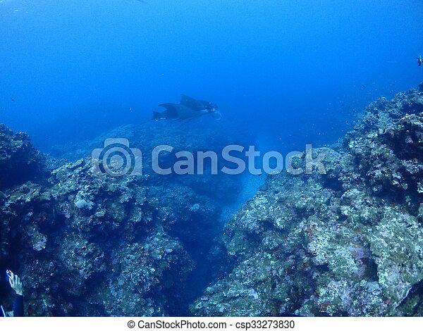 Manta ray - csp33273830