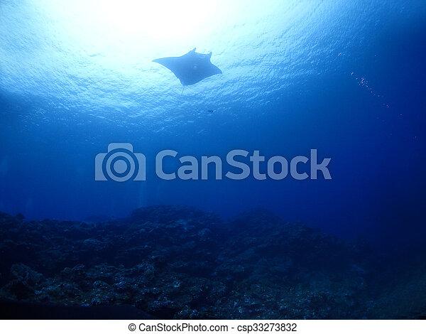 Manta ray - csp33273832