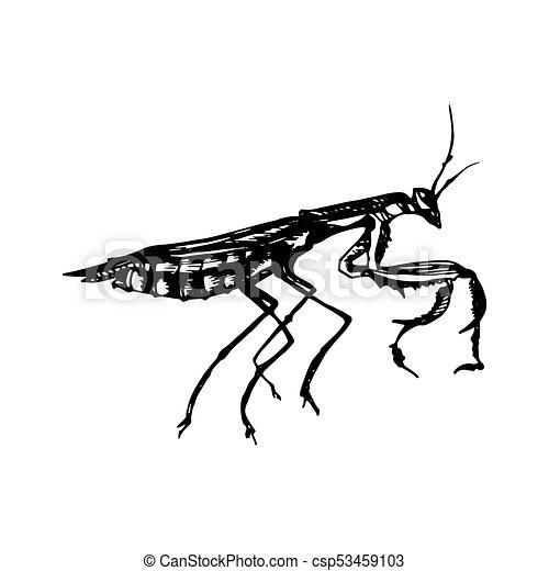 Mantis Icon - csp53459103