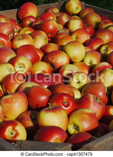 many apples in wooden boxes - csp41307479