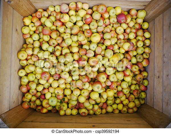 many apples in wooden boxes - csp39592194
