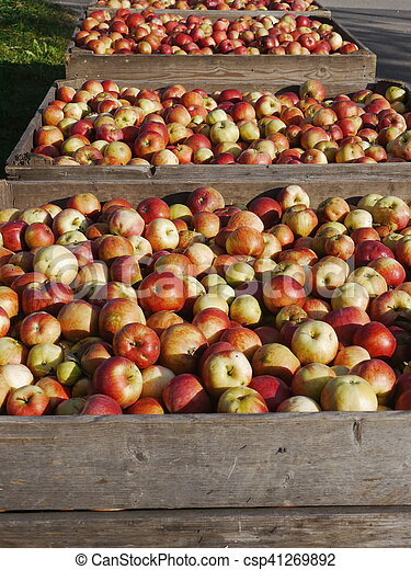 many apples in wooden boxes - csp41269892