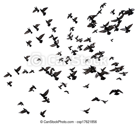 Many birds flying in the sky - csp17621856