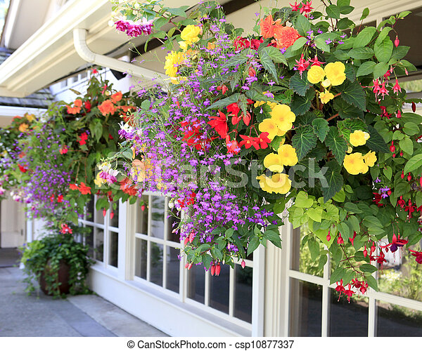 Many hanging baskets with flowers outside of house windows. - csp10877337