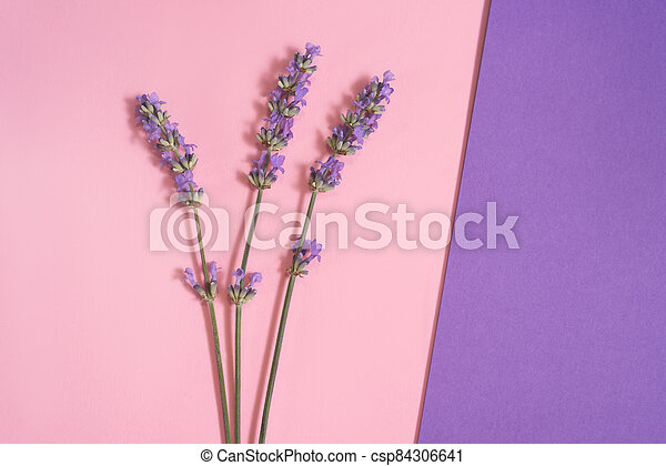 Many lavender flowers on the pink and purple background. - csp84306641