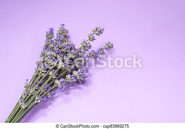 Many lavender flowers on the purple background. - csp83969275