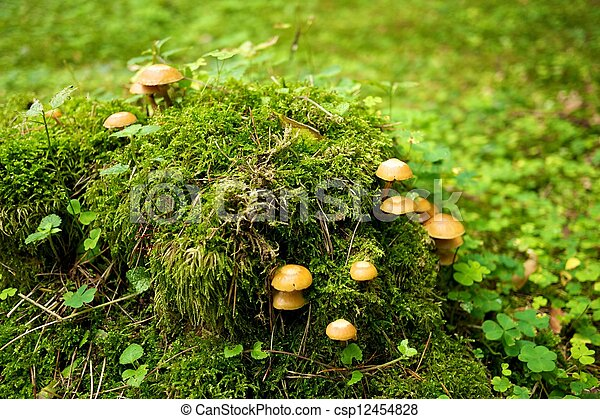 Many mushrooms growing in a forest. - csp12454828