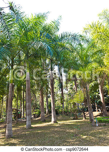 many palm trees in the park - csp9072644