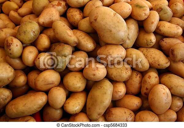 many potatoes vegetable pattern background - csp5684333