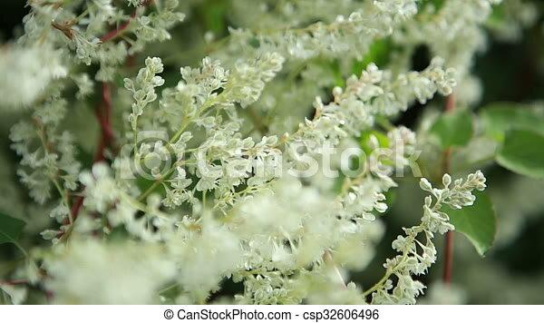 Many small white flowers on the bush ukraine stock videos search many small white flowers on the bush ukraine stock videos search movies video digital films motion clips csp32606496 mightylinksfo