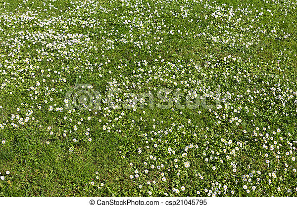 Many white small flowers in top view of meadow many white stock many white small flowers in top view of meadow csp21045795 mightylinksfo Choice Image