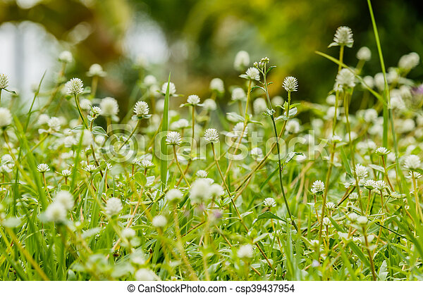 Many white small flowers of meadow stock images search stock many white small flowers of meadow csp39437954 mightylinksfo Choice Image