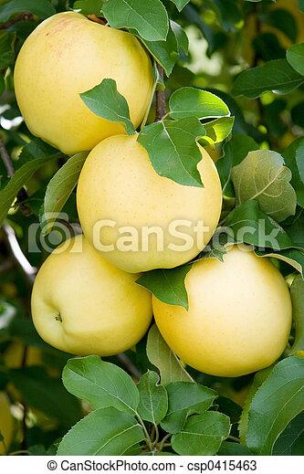 Manzanas - csp0415463