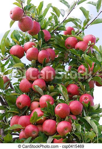 Manzanas - csp0415469