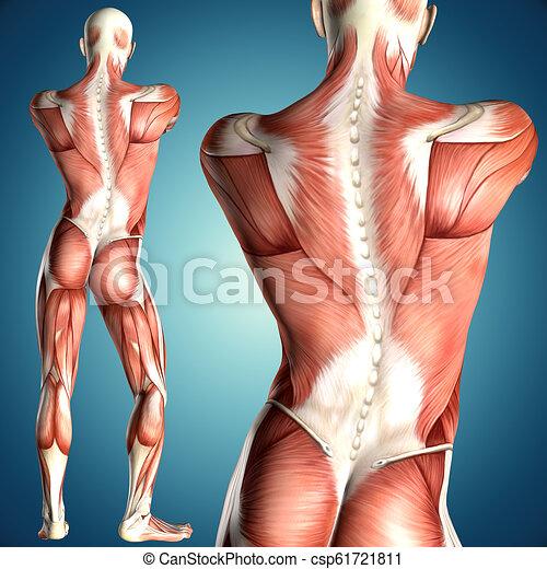 foto de anatomía masculina