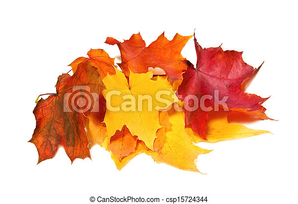 Maple fall colored leaves - csp15724344