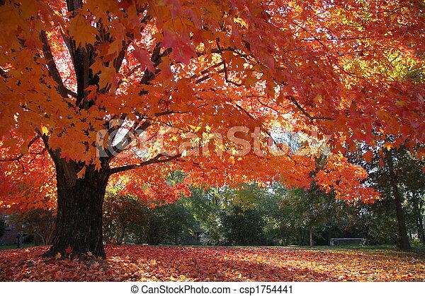 Maple Fall Glory - csp1754441
