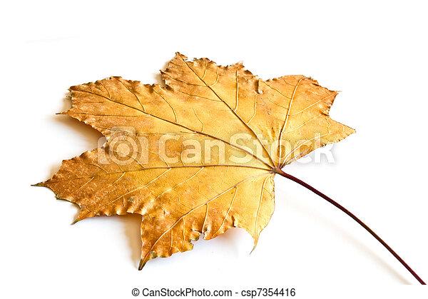 maple fall leaf - csp7354416