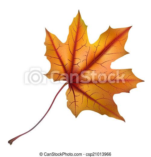 Maple leaf - csp21013966