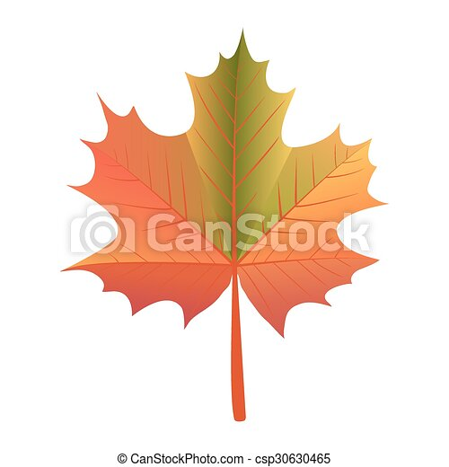 maple leaf - csp30630465
