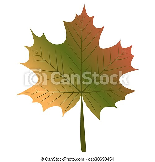 maple leaf - csp30630454